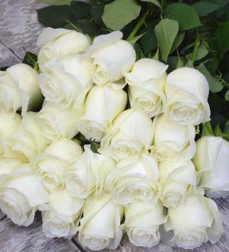 картинки с розами белыми